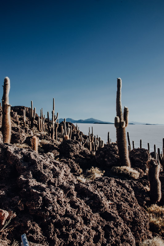 Travel Photography, Cactus, Salar Uyuni